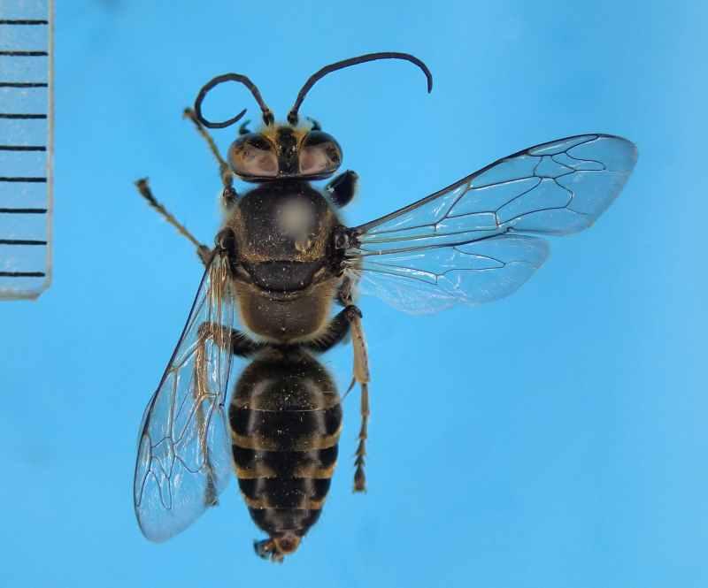 f:id:insectmoth:20170105171814j:plain