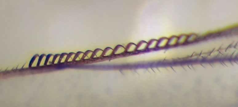 f:id:insectmoth:20170105171850j:plain