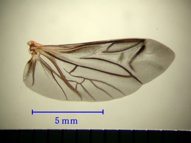 f:id:insectmoth:20170105175351j:plain