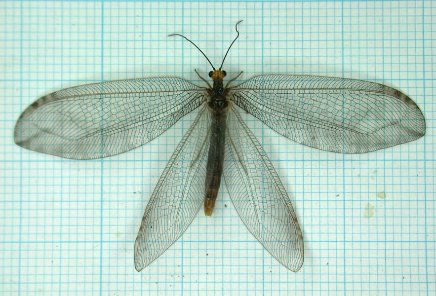 f:id:insectmoth:20170105181445j:plain