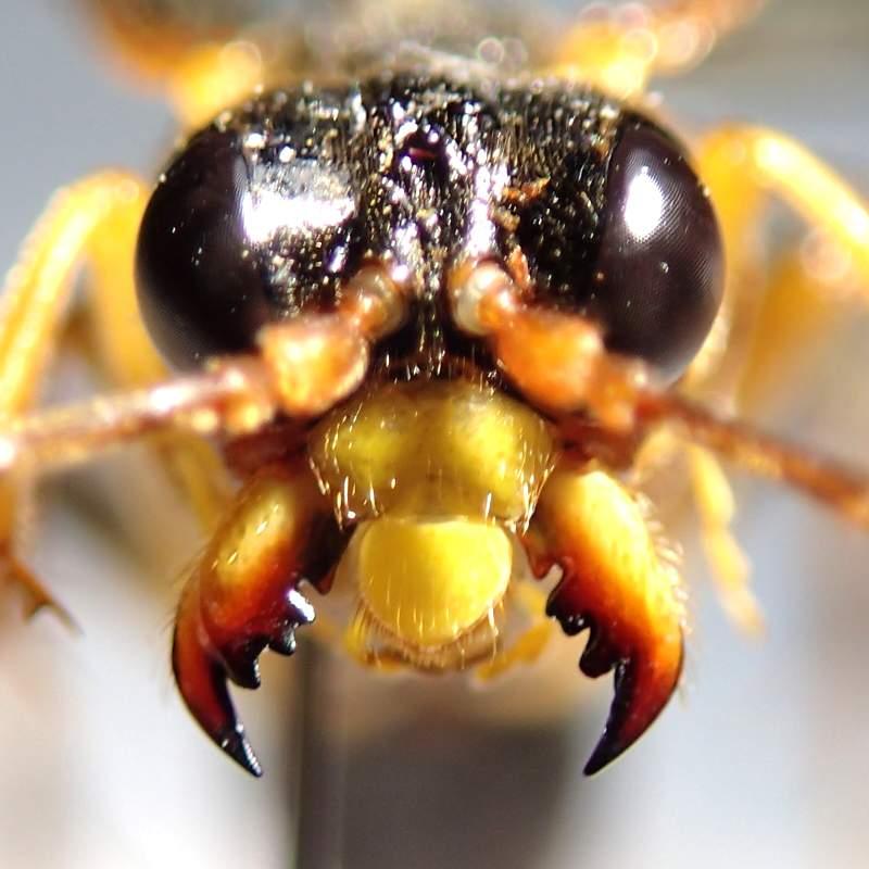 f:id:insectmoth:20170105181705j:plain