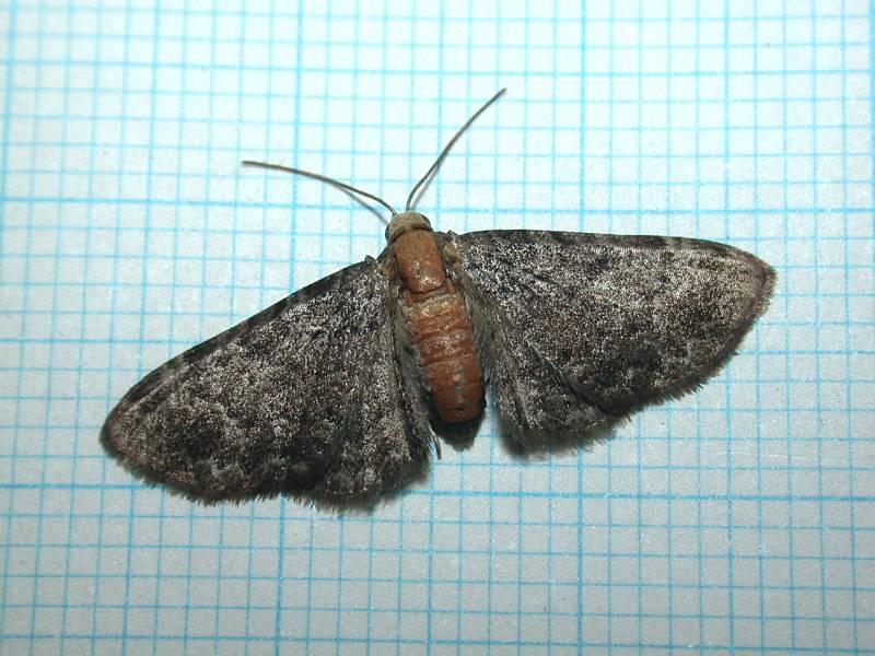 f:id:insectmoth:20170105183018j:plain