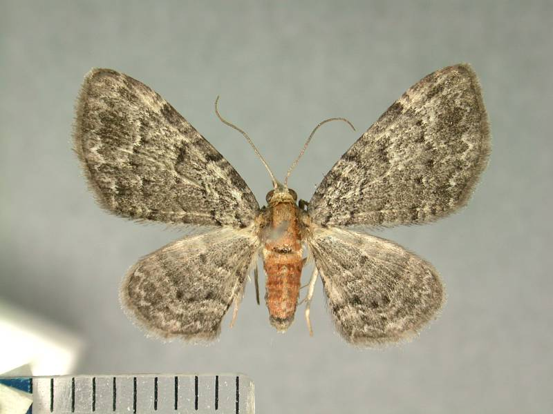 f:id:insectmoth:20170105183048j:plain
