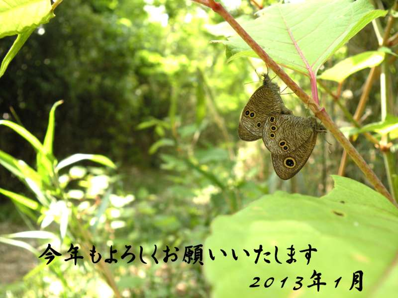 f:id:insectmoth:20170105230425j:plain