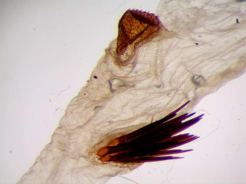 f:id:insectmoth:20170105230922j:plain