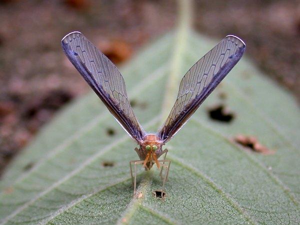 f:id:insectmoth:20170106101907j:plain