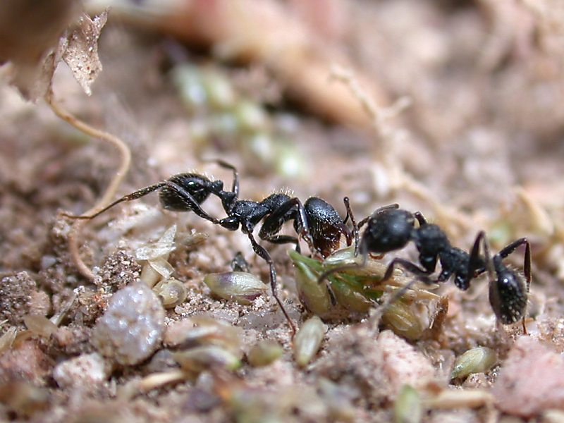 f:id:insectmoth:20170106102317j:plain