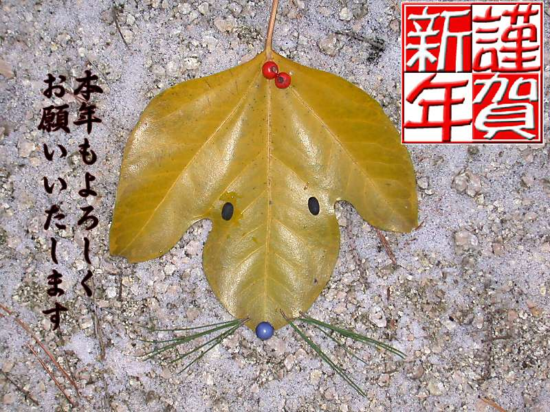 f:id:insectmoth:20170111190957j:plain