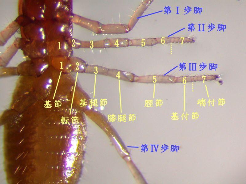 f:id:insectmoth:20170111231327j:plain