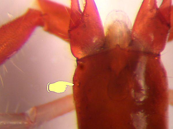 f:id:insectmoth:20170111231515j:plain