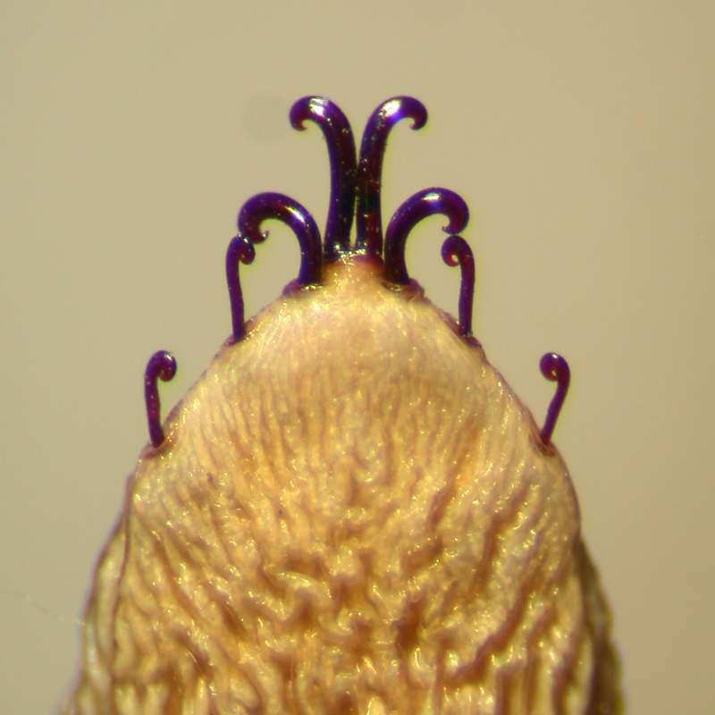 f:id:insectmoth:20170426190706j:plain