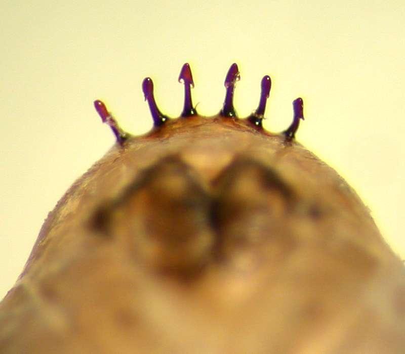 f:id:insectmoth:20170426190726j:plain