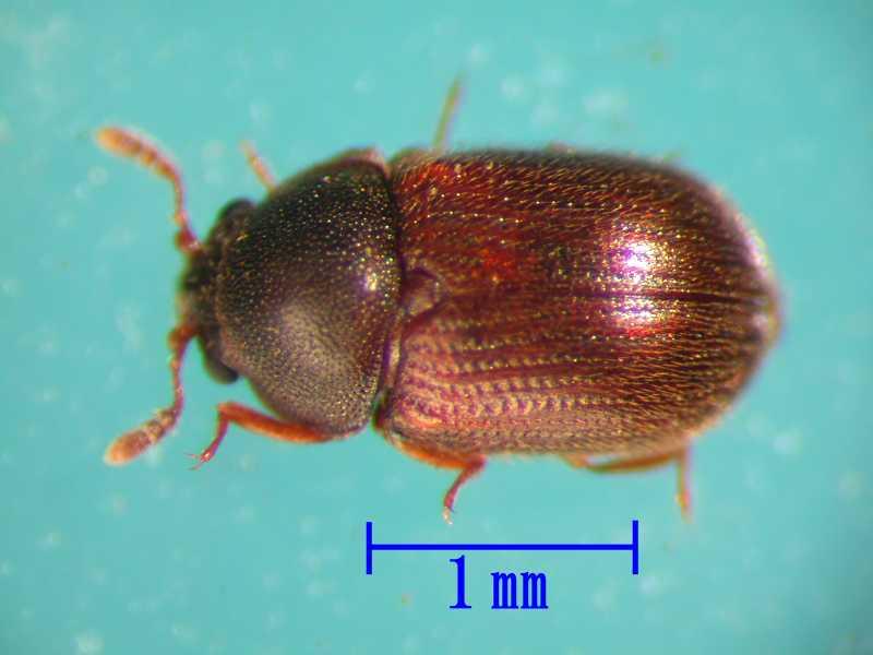 f:id:insectmoth:20170607173448j:plain