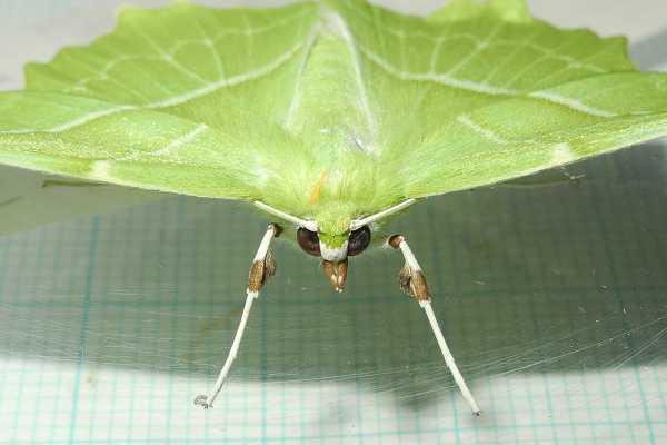 f:id:insectmoth:20170814131619j:plain