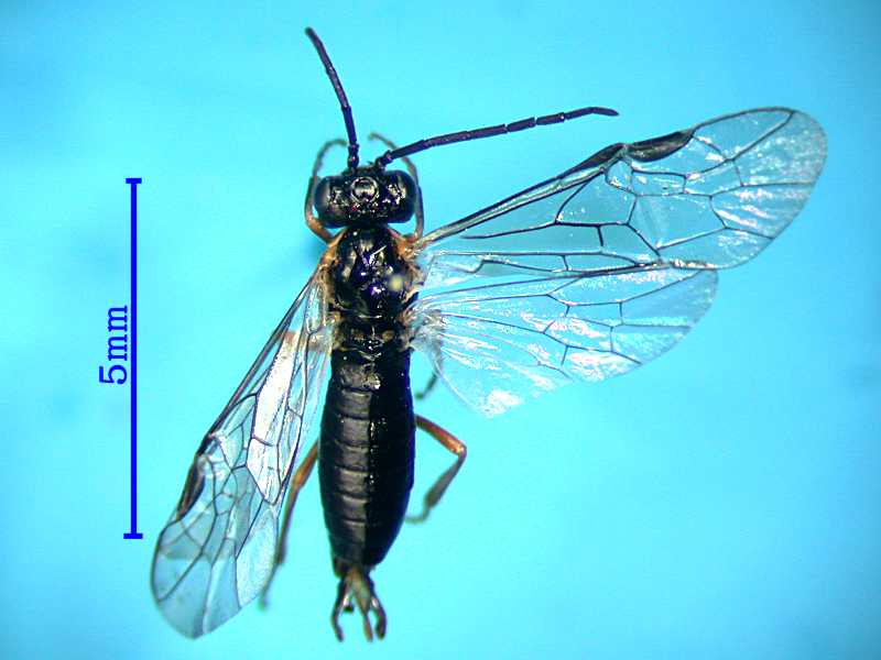 f:id:insectmoth:20170814151404j:plain