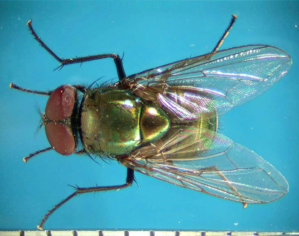 f:id:insectmoth:20170814155532j:plain