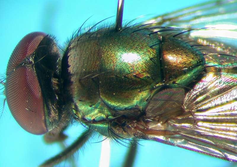 f:id:insectmoth:20170814155648j:plain