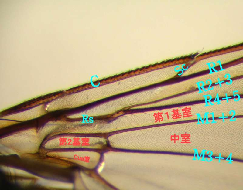 f:id:insectmoth:20170814155732j:plain