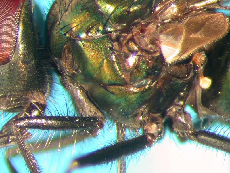f:id:insectmoth:20170814155850j:plain