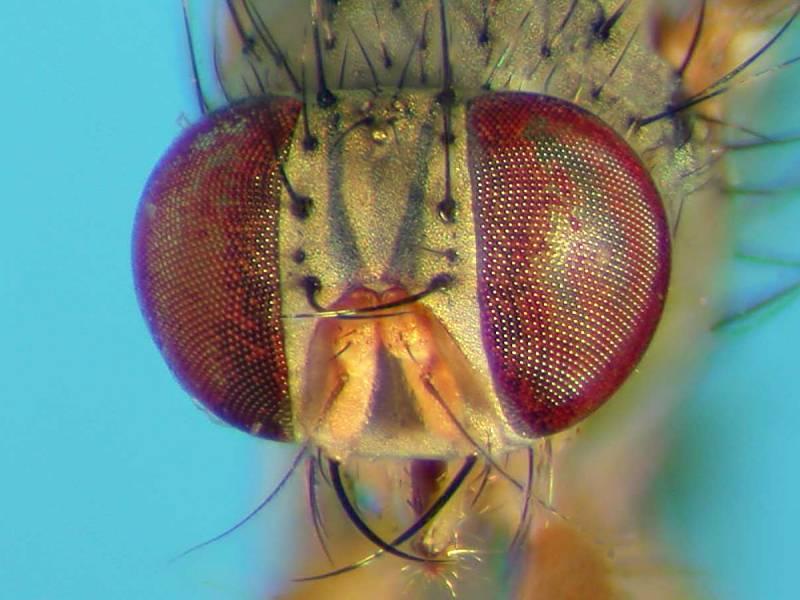 f:id:insectmoth:20170814173618j:plain