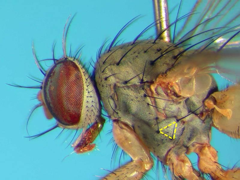 f:id:insectmoth:20170814173643j:plain