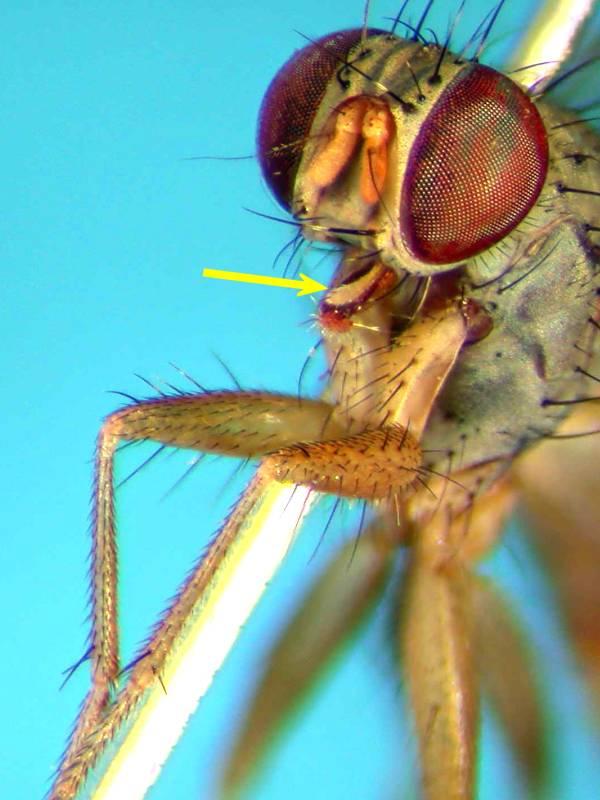 f:id:insectmoth:20170814173710j:plain