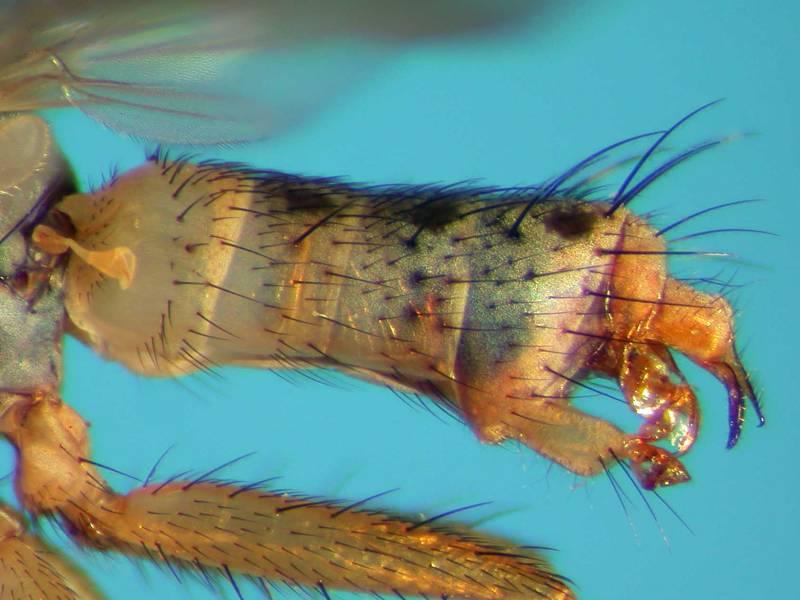 f:id:insectmoth:20170814173841j:plain