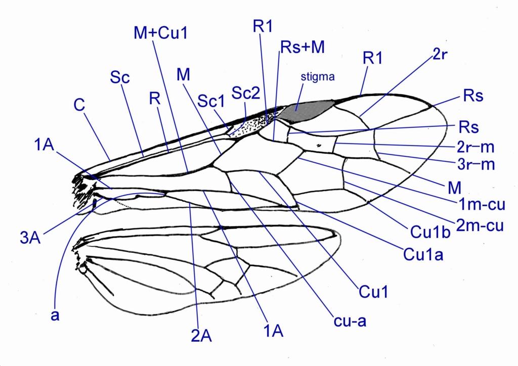 f:id:insectmoth:20171008083716j:plain