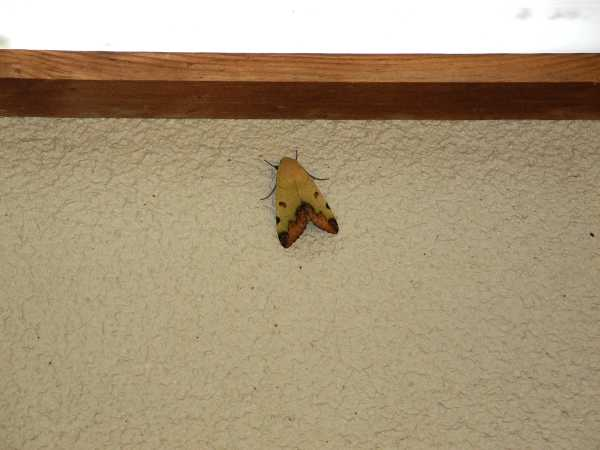 f:id:insectmoth:20171015145916j:plain
