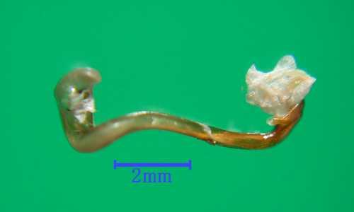 f:id:insectmoth:20171015150200j:plain