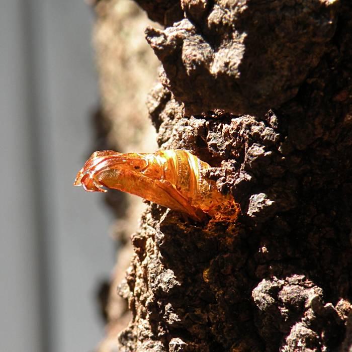 f:id:insectmoth:20171126010252j:plain