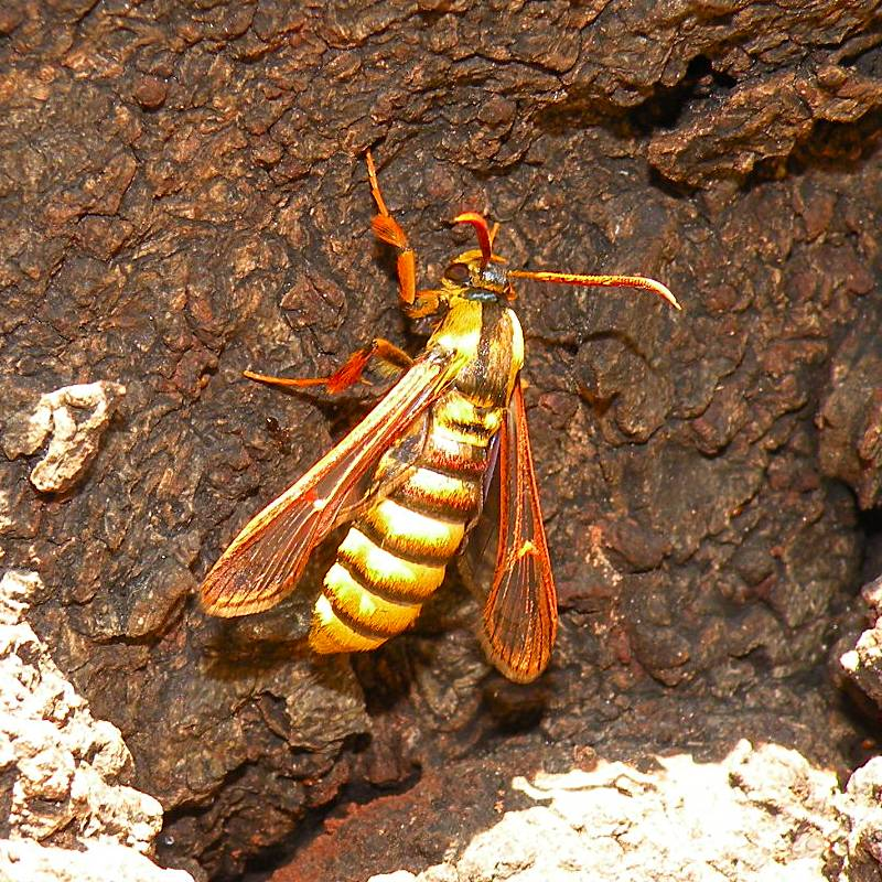 f:id:insectmoth:20171126010323j:plain