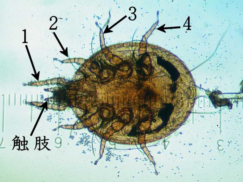 f:id:insectmoth:20171217174414j:plain