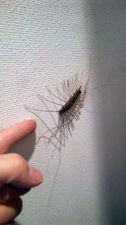 f:id:interlock-web_zettaikagushounen:20111113203820j:image
