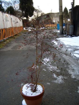 f:id:interlock-web_zettaikagushounen:20120107120616j:image