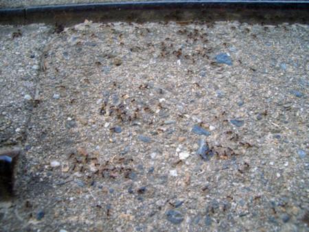 f:id:interlock-web_zettaikagushounen:20120731192625j:image