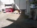 20100719養老渓谷駅の猫