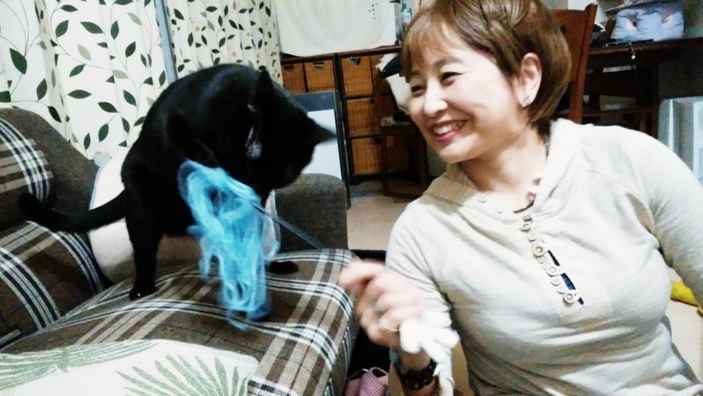 f:id:inu-neko_jyuku:20170205105027j:plain