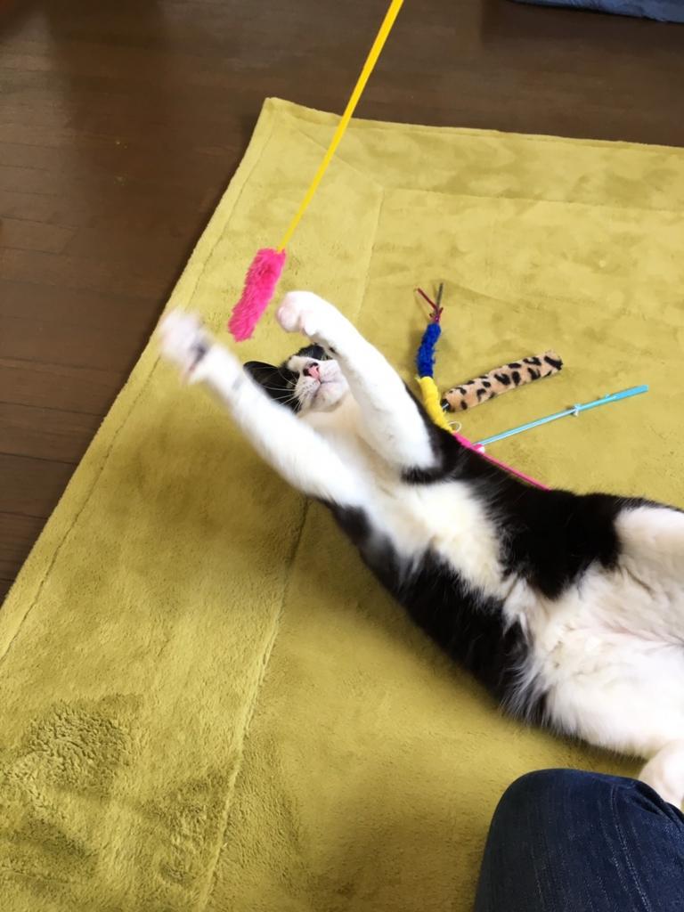 ペットホテル猫専用おすすめ5選!気になる料金と …