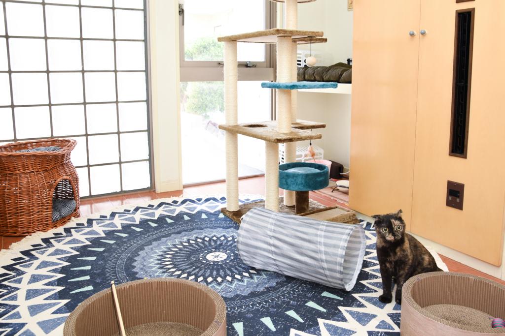 ホテルの紹介 | 猫専用のペットホテル「キャッツ …