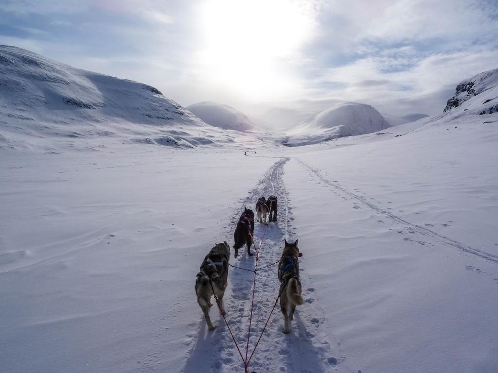 犬 寒い 寒さ 雪