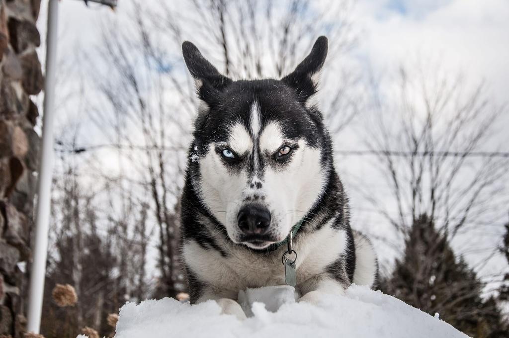 犬 フードアグレッシブ