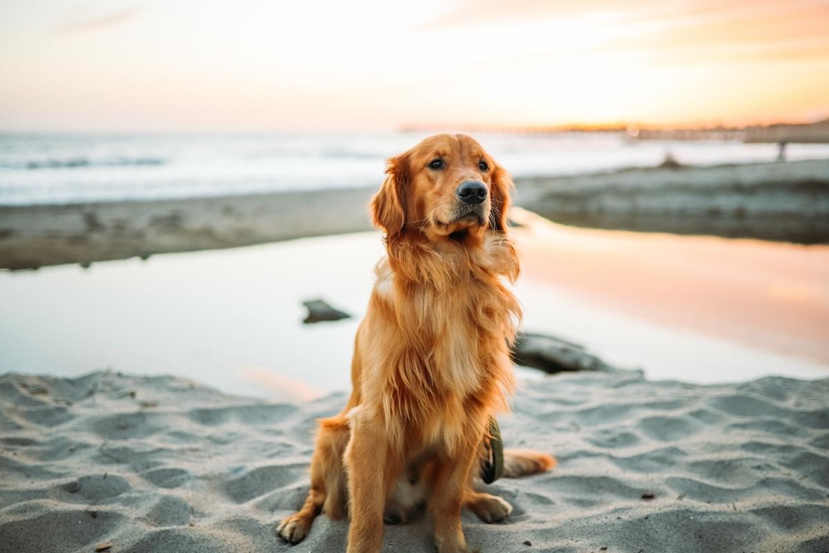 犬 夏 散歩