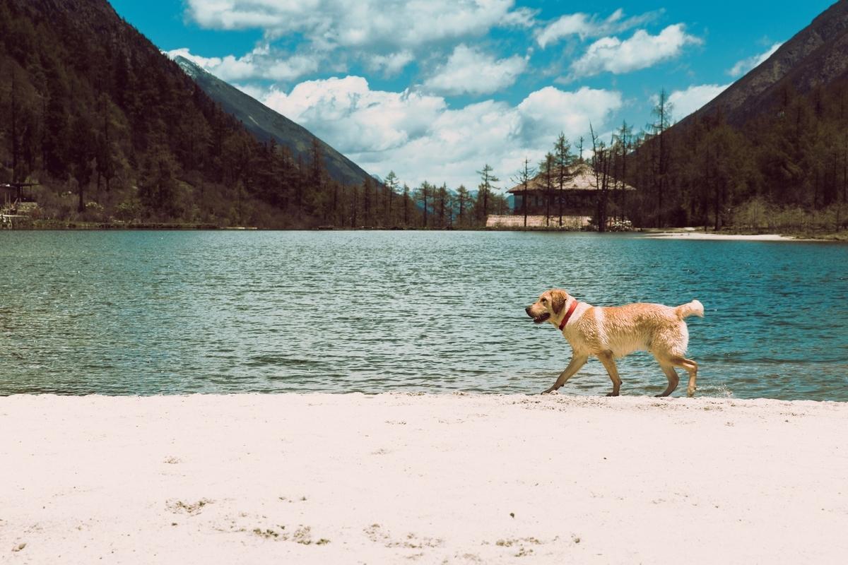犬 冷房 夏