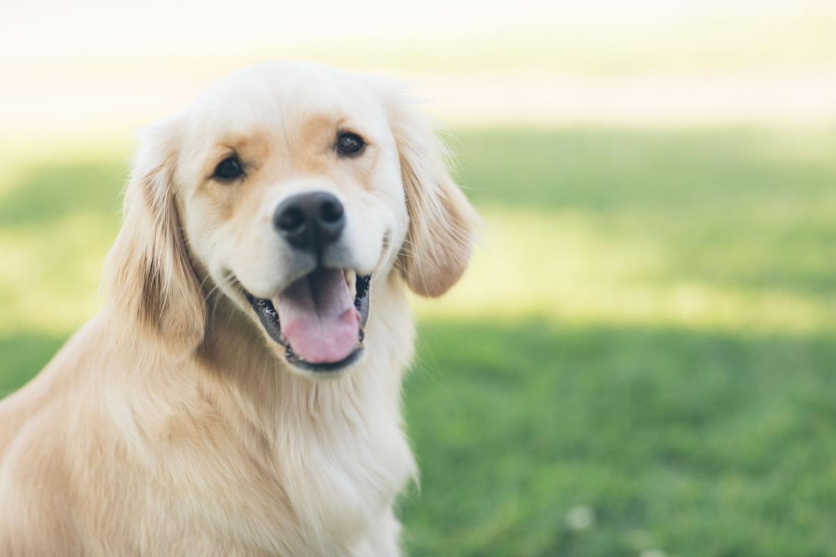 犬 新型コロナウイルス