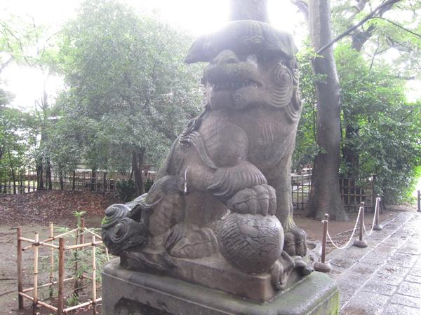 武蔵野八幡宮の左の狛犬