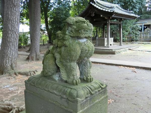 和泉熊野神社の左の狛犬