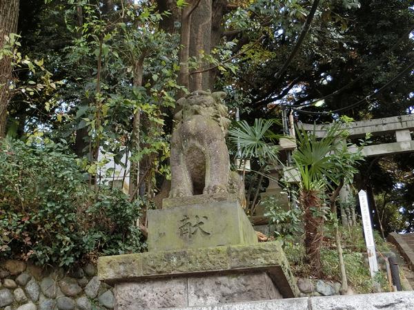 代々木八幡宮の左の狛犬