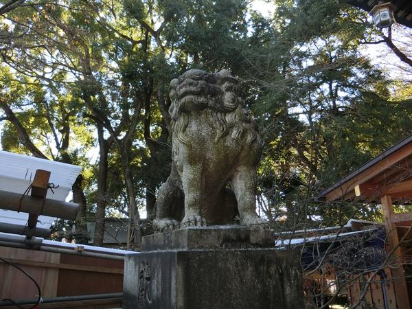 大宮八幡宮の左の狛犬