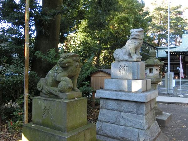 下高井戸浜田山八幡神社の左の狛犬